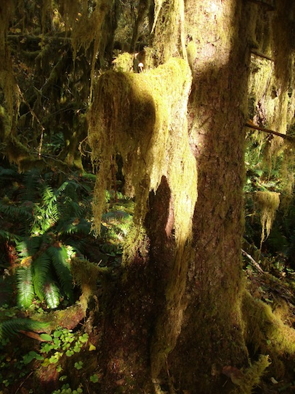 Love the hanging mosses