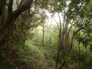 Abel Tasman - misty woods