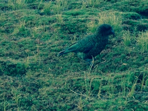 Kea who entertained me during dinner.