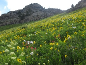 Up towards Daisy Pass - so many beautiful places around Crested Butte!