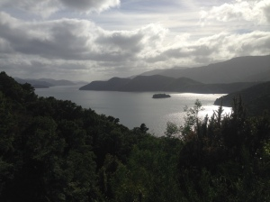 Morning on the Queen Charlotte track