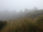 """The mist makes it look like """"Middle Earth"""""""