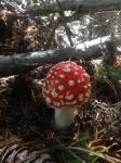 It's mushroom season!