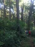 Hiking and Biking among the big trees!