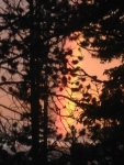 Beautiful Sunset Rainbow through the trees
