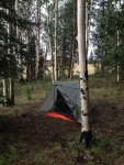 """Another camp in the Aspens - see my """"bear bag"""" hanging in the distance."""