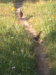 Other trail users - Grouse