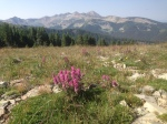 I love the Alpine flowers