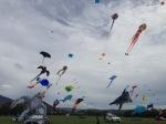 Nelson Kite festival